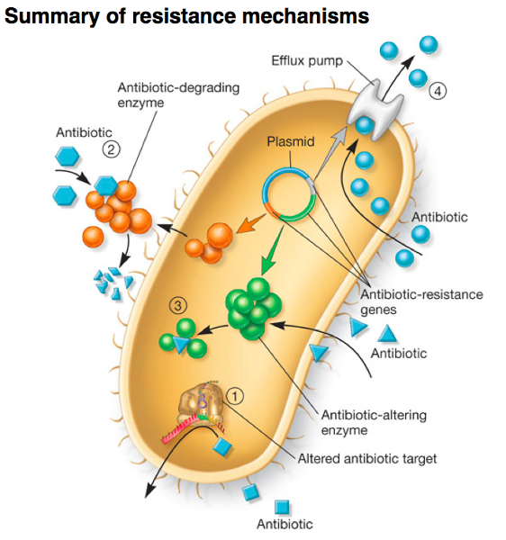 Ribosome-targeting antibiotics and mechanisms of bacterial resistance.
