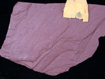 Print Metamorphic Rock Geology Lab Flashcards Easy Notecards