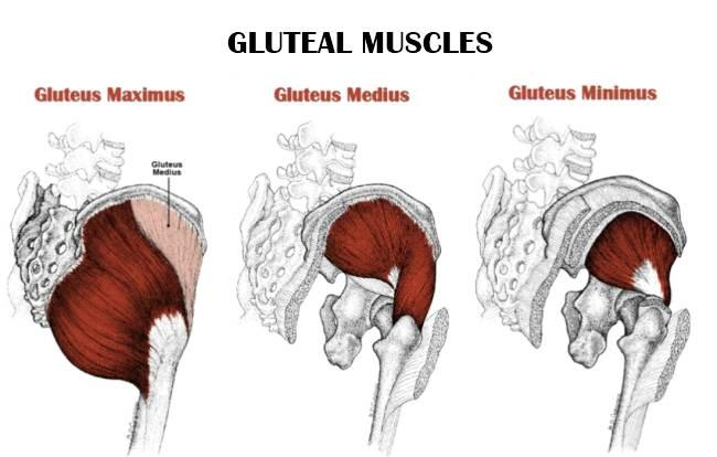 Muscles Part 9 Flashcards | Easy Notecards