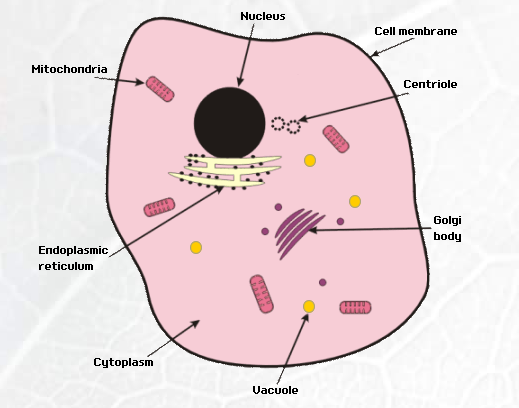 micro organisms cells flashcards easy notecards diagram of a cell membrane #8