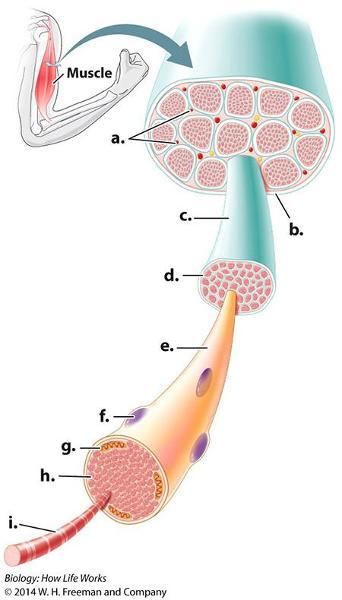 Print Biology 152 Rounds