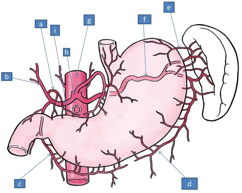 Anatomy Semester I Block Ii Gastrointestinal Tract I Flashcards