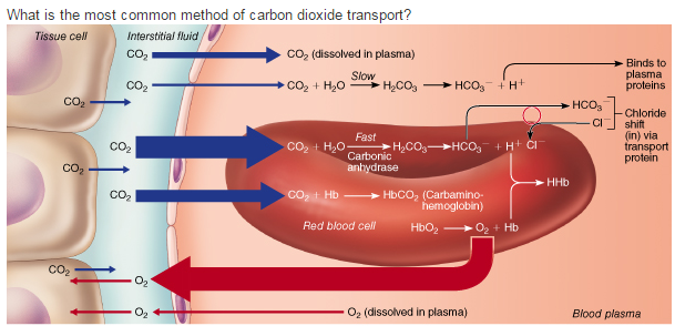 the effect of dissolved carbon dioxide Bon dioxide thornton (4) reported that the treatment of various types of plant tissues with carbon dioxide resulted in a decrease in the hydrogen ion concentration of the juice extracted from those the studies on the effect of carbon dioxide reported in this concentration in the cell sap due to the dissolved carbon dioxide.