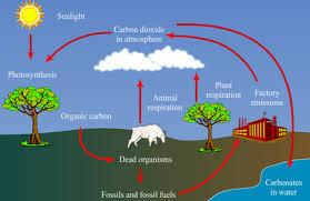 carbon an important resource on earth Novel catalyst to convert carbon dioxide invented  from waste to resource carbon dioxide  although it forms an important part of the planet's carbon cycle,.