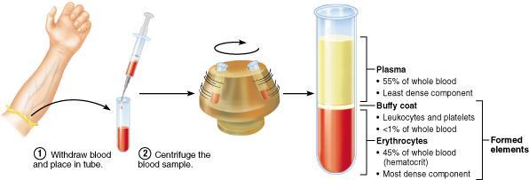 Image result for blood centrifuged