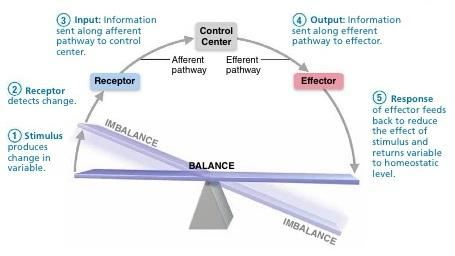 literature review on internal control system This study aimed at recognizing the effectiveness of internal control systems in  enhancing  through presenting the conceptual framework and literature review.