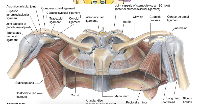 Sternoclavicular Joint Dislocation