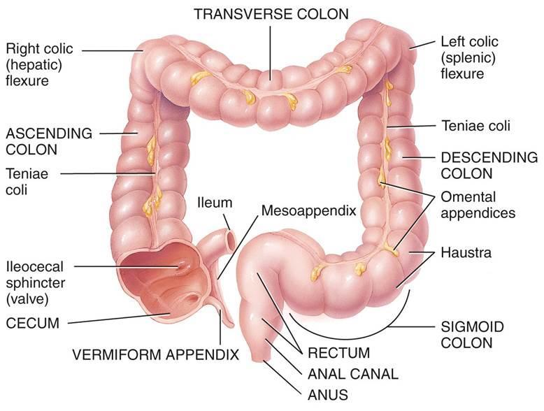 6  digestive system