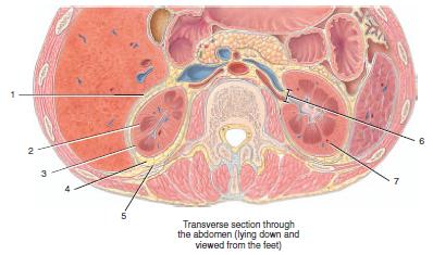 Anatomy Exam 3 Flashcards | Easy Notecards