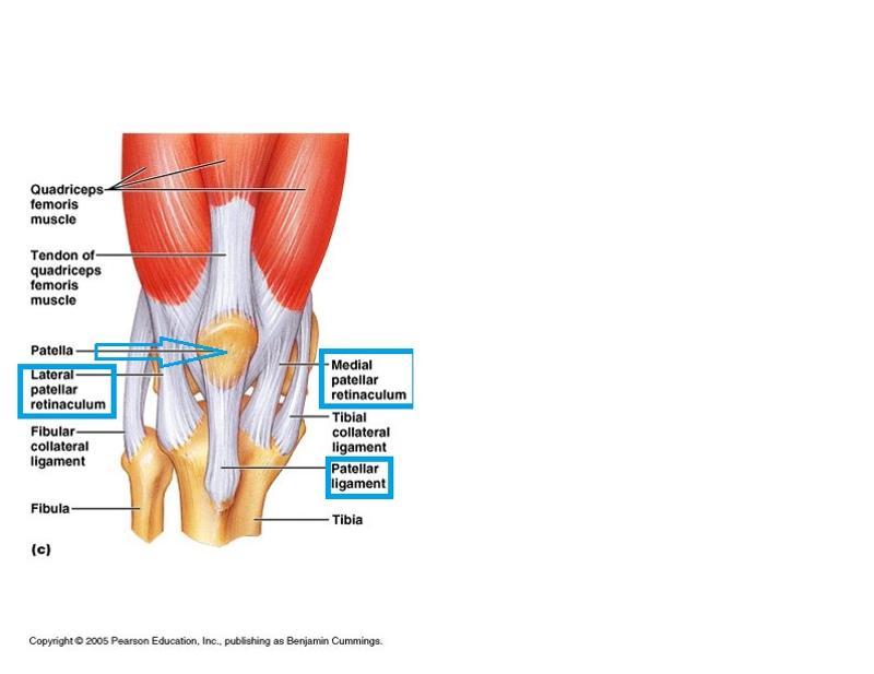 Großartig Pearson Anatomie Und Physiologie Laborhandbuch Antworten ...