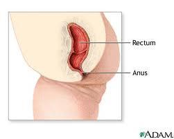 Consider, she swallowed it anus intestine