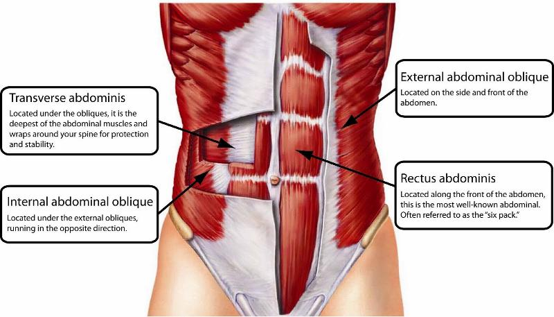 Skeletal Muscles Of The Lower Extremity Flashcards Easy Notecards