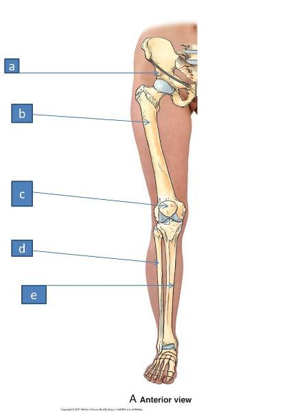 Print Anatomy Block III- Gluteal Region, Thigh, Lumbosacral Plexus ...