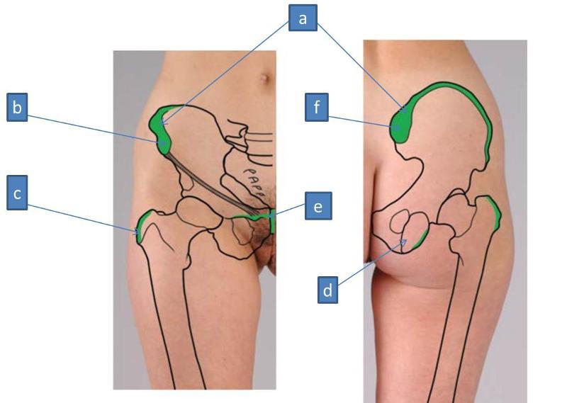 Anatomy Block Iii Gluteal Region Thigh Lumbosacral Plexus
