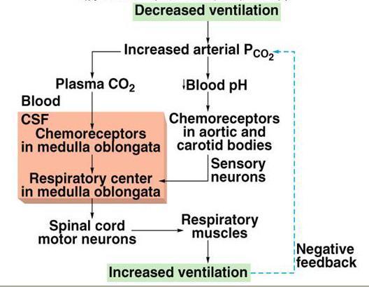 respiration and blood pressure pdf