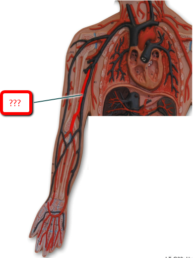 Radial artery location