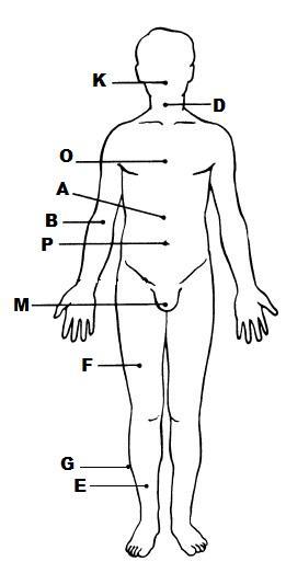 Exercise 1: The Language of Anatomy Flashcards | Easy Notecards