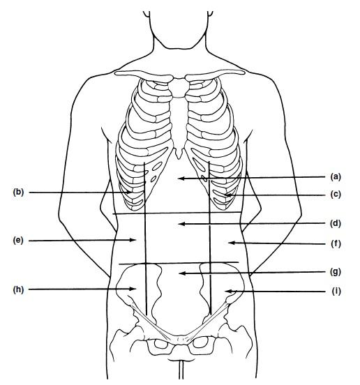 body regions worksheet...