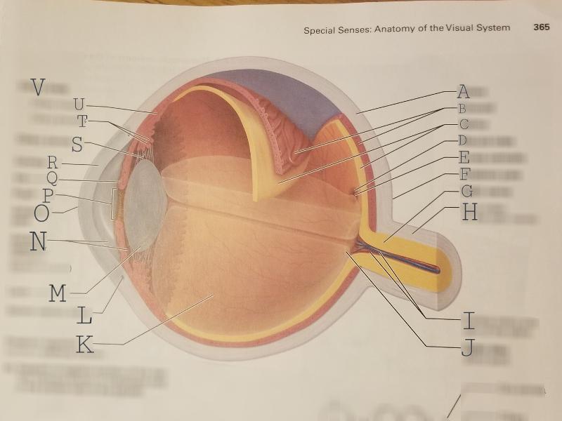 Visual system anatomy