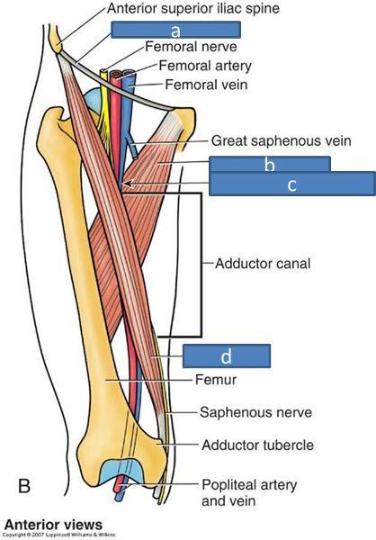 Anatomy Block III- Gluteal Region, Thigh, Lumbosacral Plexus ...