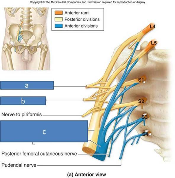 print anatomy block iii gluteal region thigh