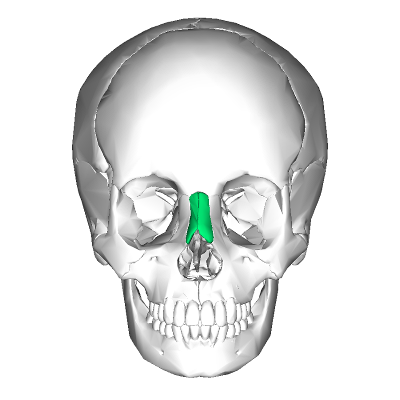 print ra l2: facial bones flashcards | easy notecards, Sphenoid