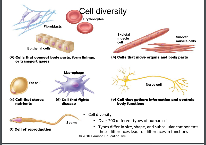 diversity of living organism Ppt on diversity for class 9- authorstream presentation.