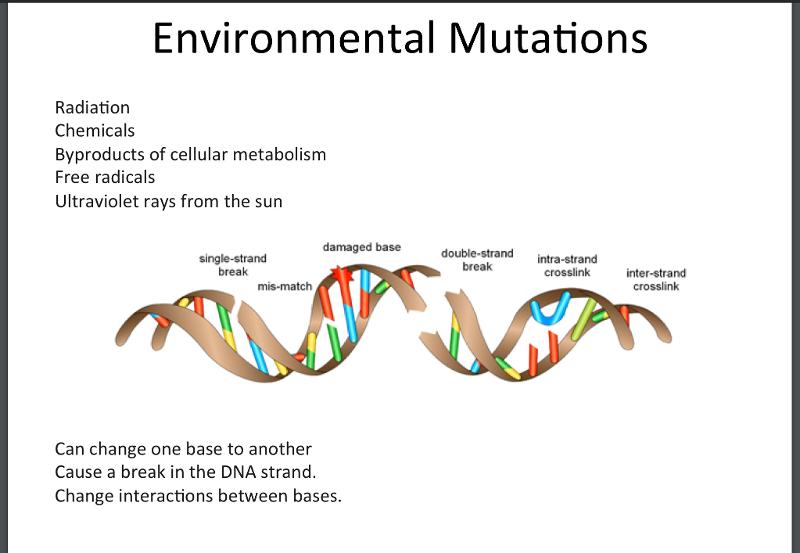 environmental mutagens - photo #45