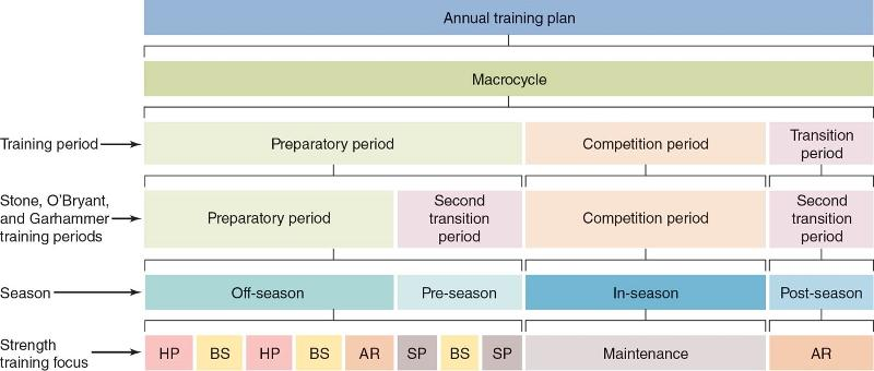 undulating periodization template - periodization flashcards easy notecards