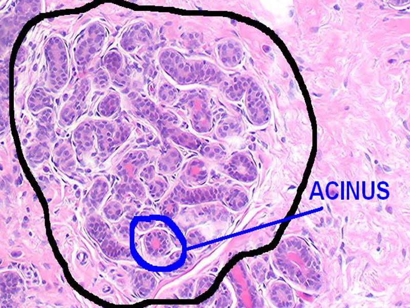 pictorial essay salivary gland imaging Explication de texte philosophie conclusion of essay about war setting essay for twilight esl essays aids awareness essays, pictorial essay salivary gland imaging in nuclear a project on pictorial essay salivary gland imaging in nuclear essay paper conclusions essay about the.
