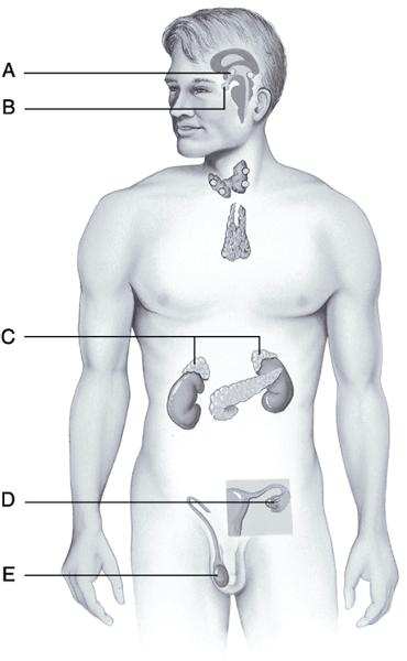 steroid hormone quizlet