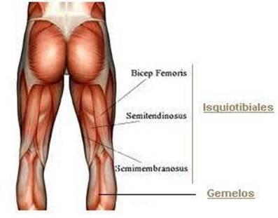 Print Las relaciones anatómicas importantes en las extremidades ...