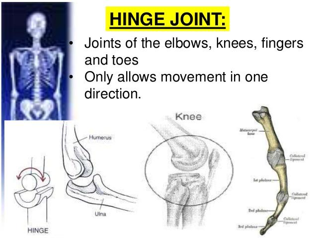 Joints Of The Lower Limb Flashcards Easy Notecards