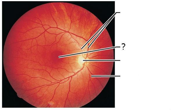 Anatomy of the Eye Fla...