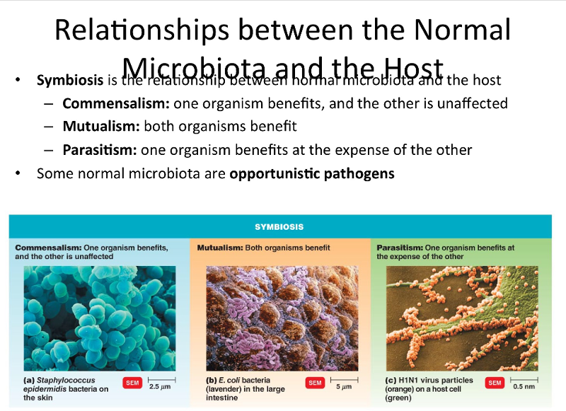 relationship between normal microbiota and the host