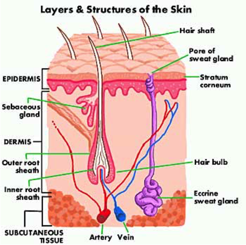 an introduction to the issue of skin cancer