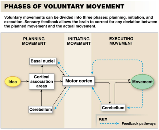 examples of voluntary or undetermined action or movement Voluntary and involuntary actions voluntary actions - an act originated by the doer with the knowledge of the particular circumstances of the example: tyrant.