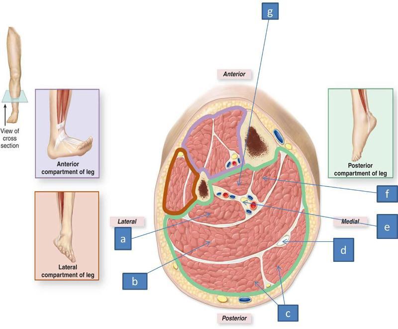 anatomy block iii