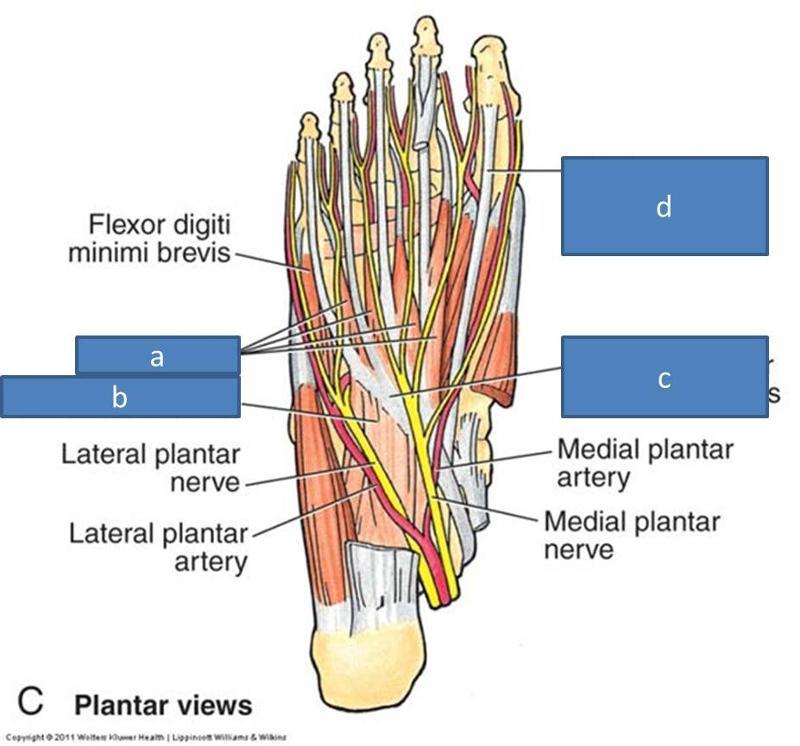 Flexor hallucis longus tendon tendonitis, lower back and leg pain in ...