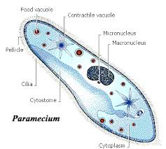 Bacteria: Structure, Growth, Culturing and Counting