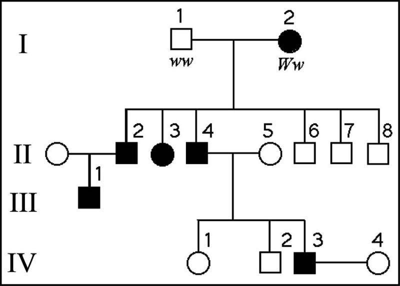 Print Exam 3 Biology Flashcards Easy Notecards border=