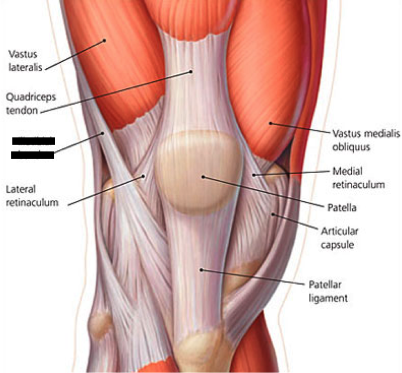 Lower Extremity Muscles Flashcards Easy Notecards