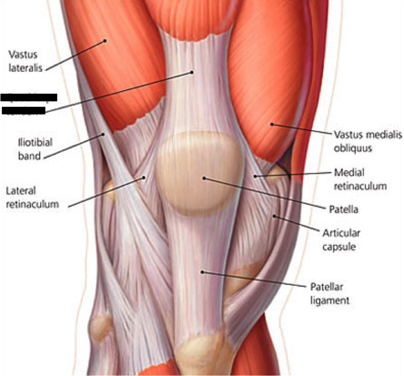 Lower Extremity Muscles Flashcards