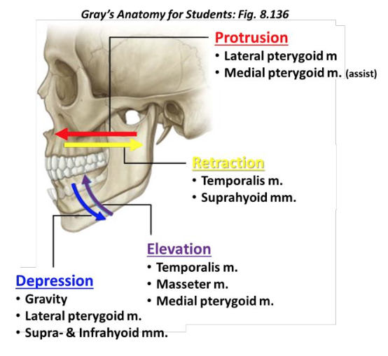 Definition of depression in anatomy
