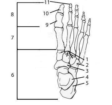 anatomy chapter 1 flashcards