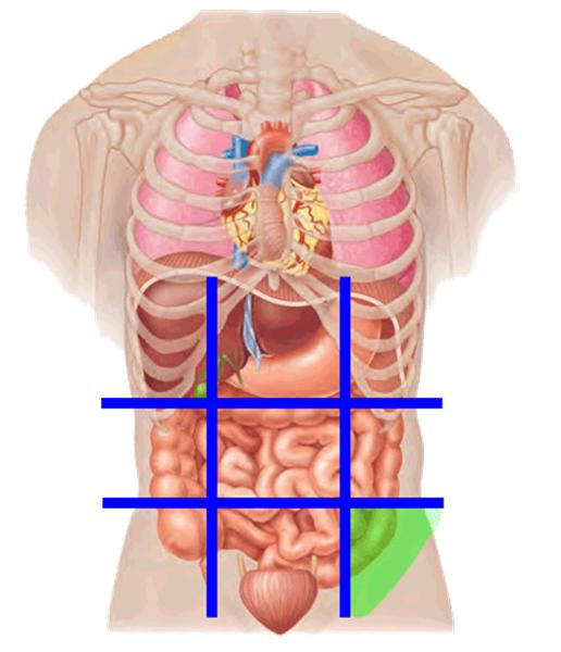 Sectional Anatomy 1 Flashcards Easy Notecards