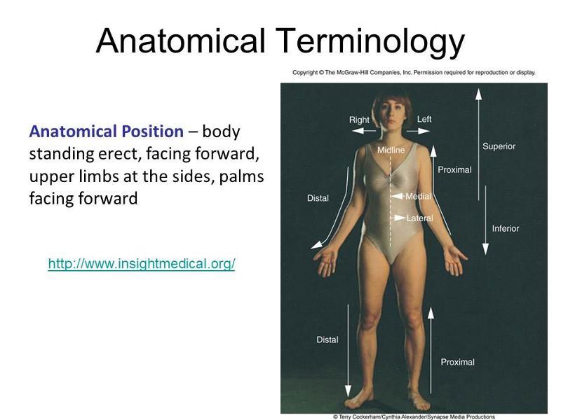 Human Body Regions Flashcards Easy Notecards
