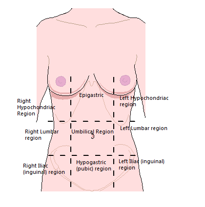 abdomen and ventral body cavity The abdominal cavity is hardly an empty space it contains a number of crucial  organs including the lower part of the esophagus, the stomach, small intestine,.