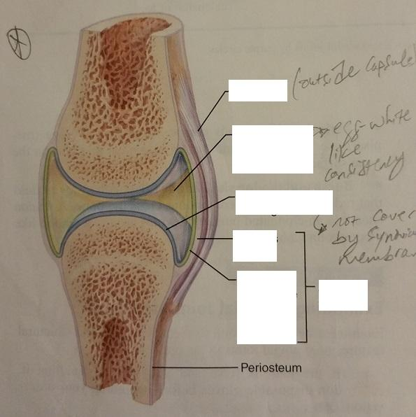 structure of a synovial joint pdf