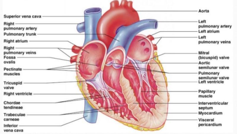 Anatomy of a virgina